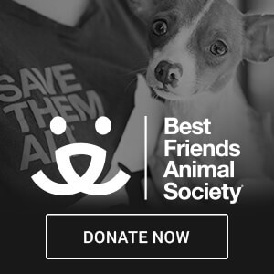 best friend animal society